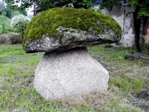 Ein typischer Fall von Steinpilz